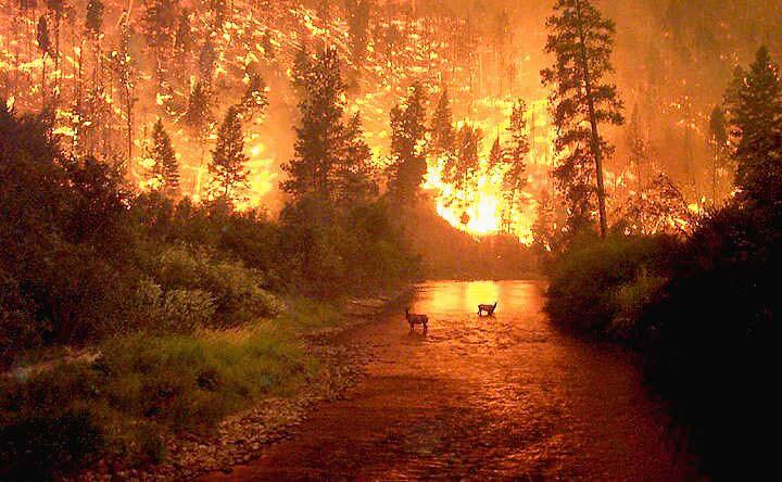 Montana Bitterroot Fire