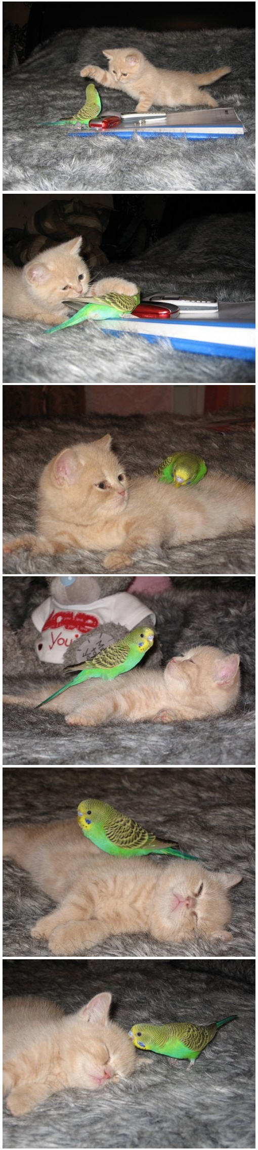 Kitty Tamed by Bird